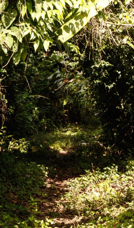 Corcovado Forest Hike-4011