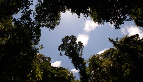 Corcovado Forest Hike-4080