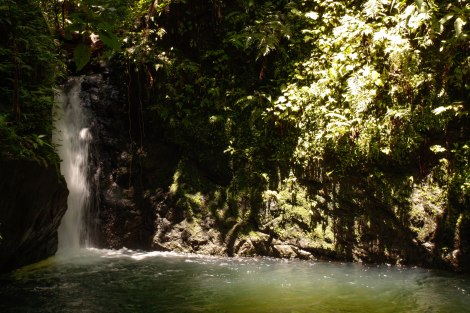 Corcovado Forest Hike-4083