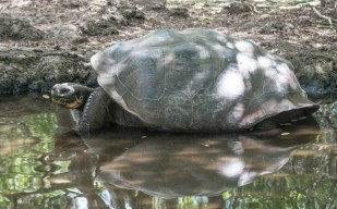 Tortoise Bath