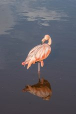 Bird Walk-2598