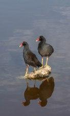 Bird Walk-2601