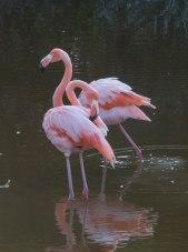 Bird Walk-2615